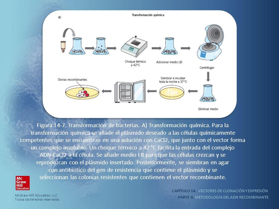Figura 14-7. Transformación de bacterias. A) Transformación química