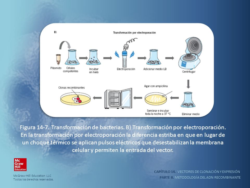 Figura 14-7. Transformación de bacterias