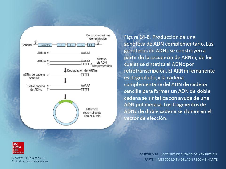 Figura 14-8. Producción de una genoteca de ADN complementario. Las