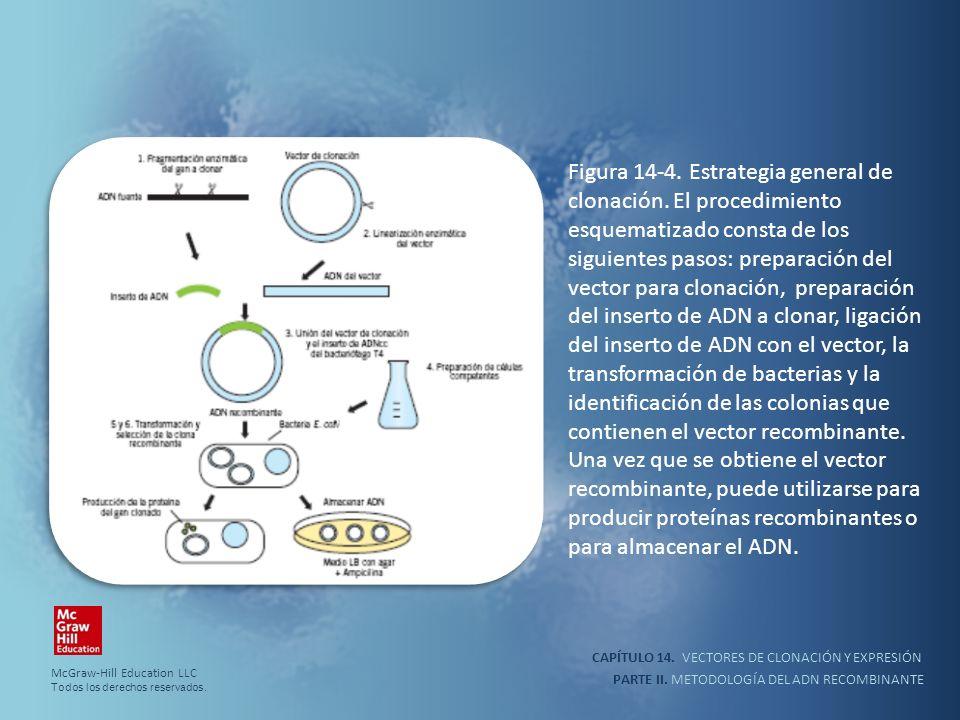 Figura 14-4. Estrategia general de clonación