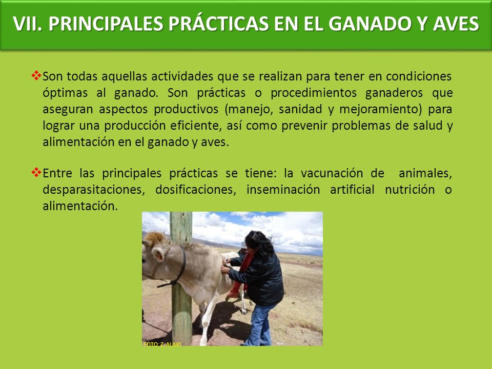 VII. PRINCIPALES PRÁCTICAS EN EL GANADO Y AVES
