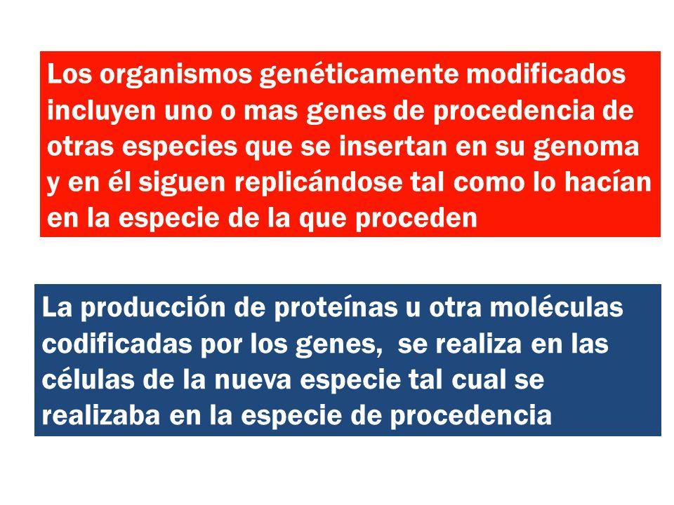 Los organismos genéticamente modificados incluyen uno o mas genes de procedencia de otras especies que se insertan en su genoma y en él siguen replicándose tal como lo hacían en la especie de la que proceden