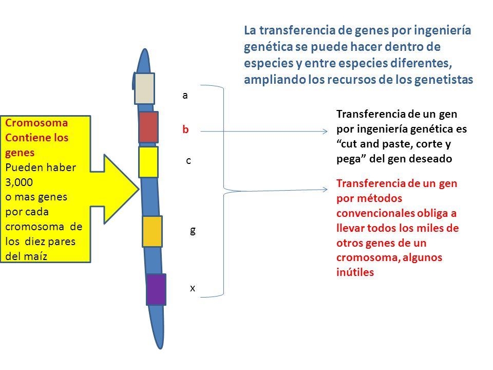 La transferencia de genes por ingeniería genética se puede hacer dentro de especies y entre especies diferentes, ampliando los recursos de los genetistas