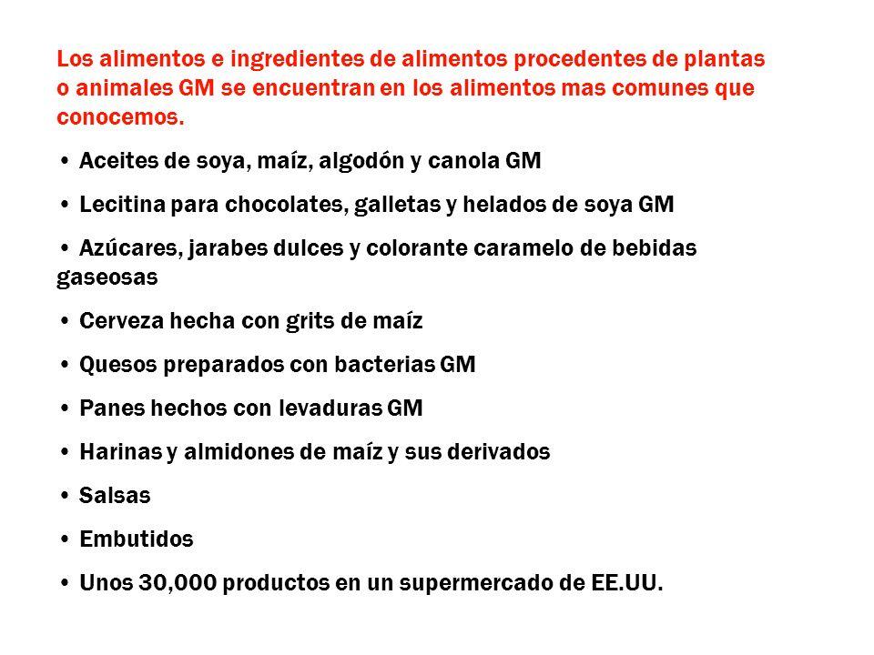 Los alimentos e ingredientes de alimentos procedentes de plantas o animales GM se encuentran en los alimentos mas comunes que conocemos.