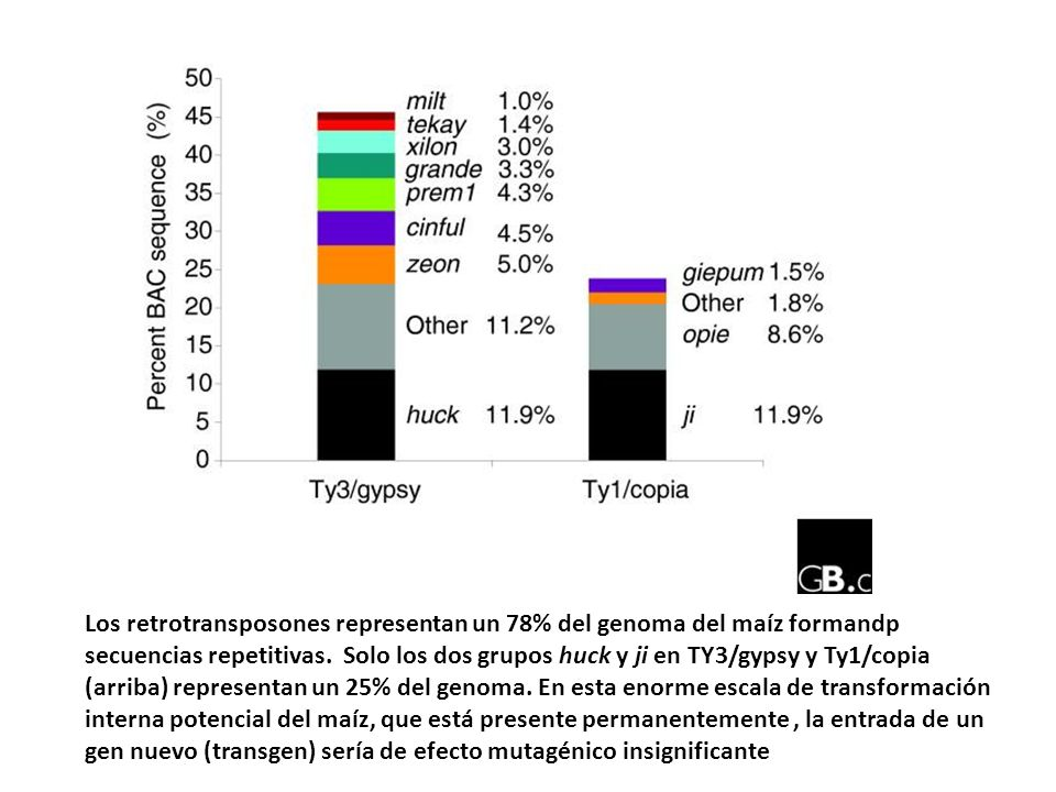 Los retrotransposones representan un 78% del genoma del maíz formandp secuencias repetitivas.