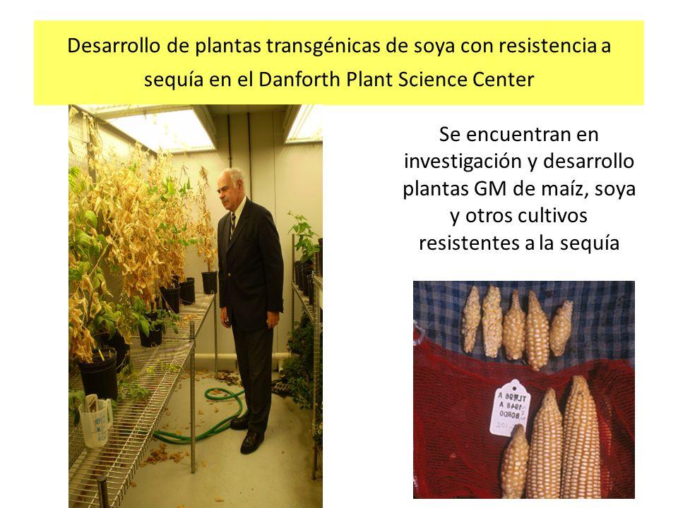Desarrollo de plantas transgénicas de soya con resistencia a sequía en el Danforth Plant Science Center