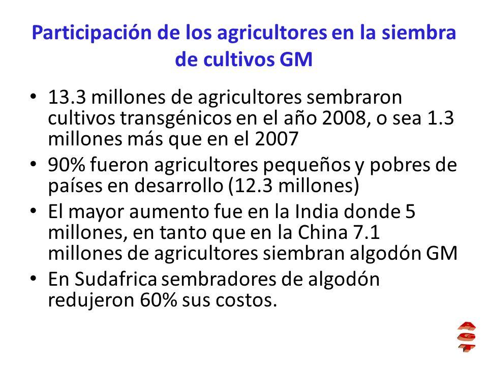 Participación de los agricultores en la siembra de cultivos GM