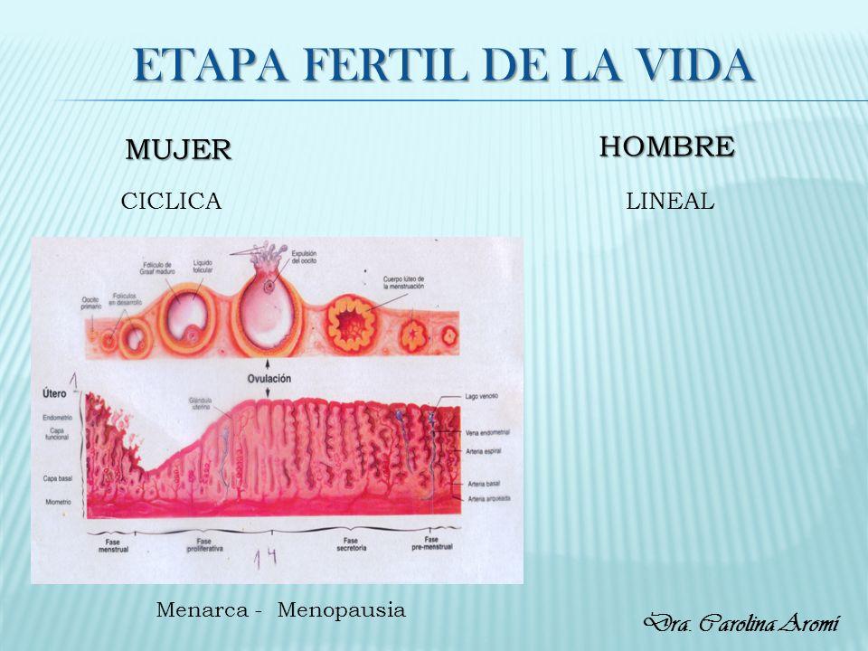 ETAPA FERTIL DE LA VIDA HOMBRE MUJER Dra. Carolina Aromí CICLICA