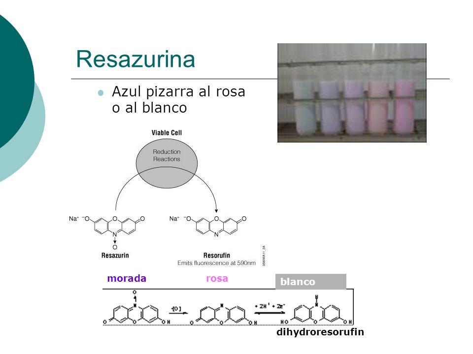 Resazurina Azul pizarra al rosa o al blanco morada rosa