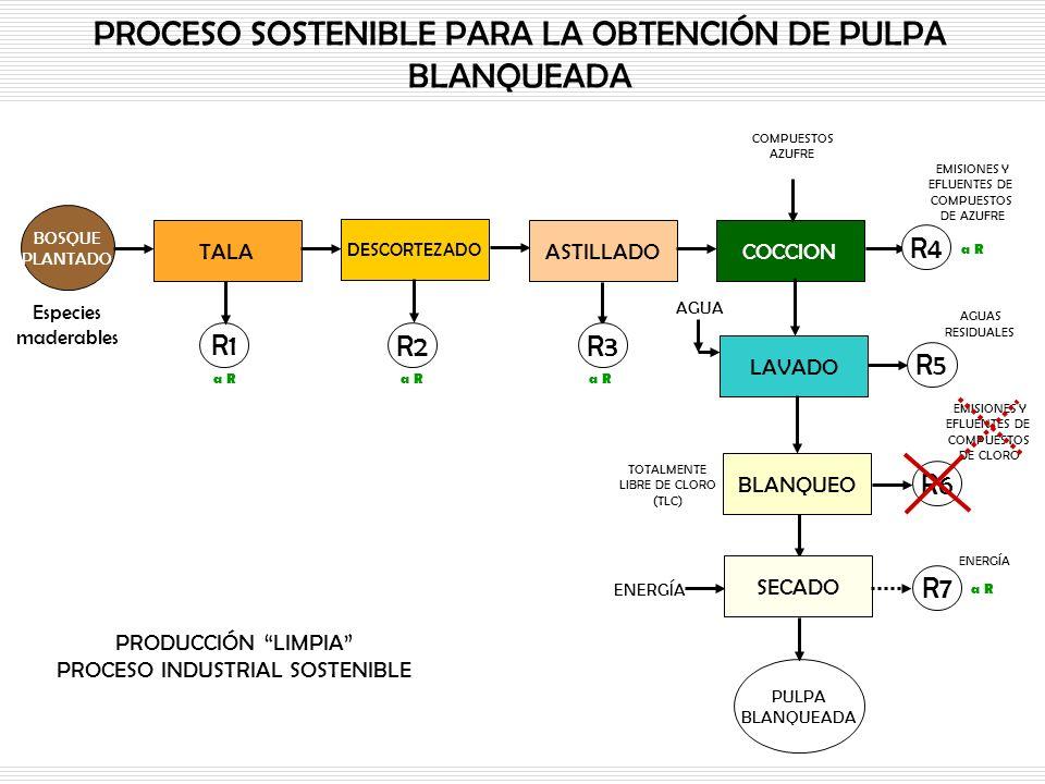 PROCESO SOSTENIBLE PARA LA OBTENCIÓN DE PULPA BLANQUEADA