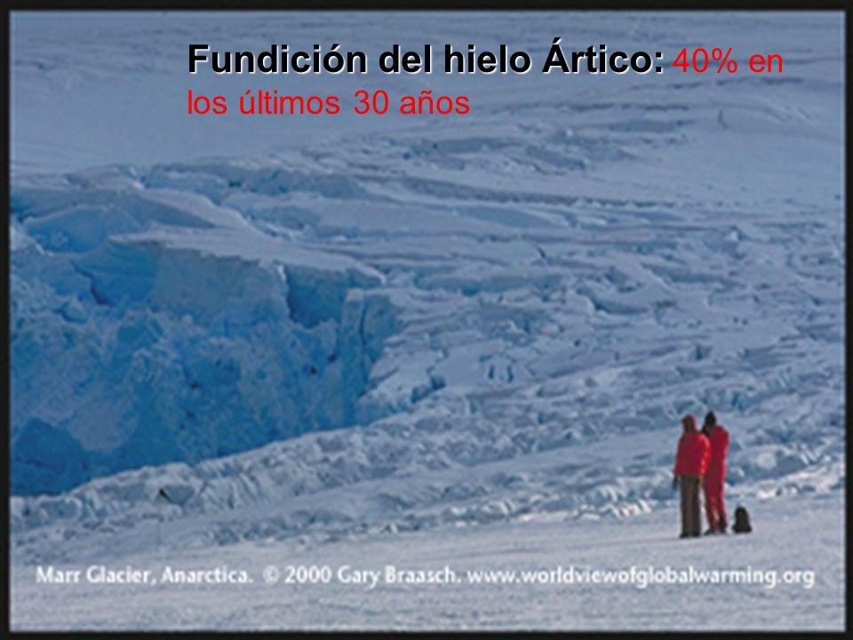 Fundición del hielo Ártico: 40% en los últimos 30 años
