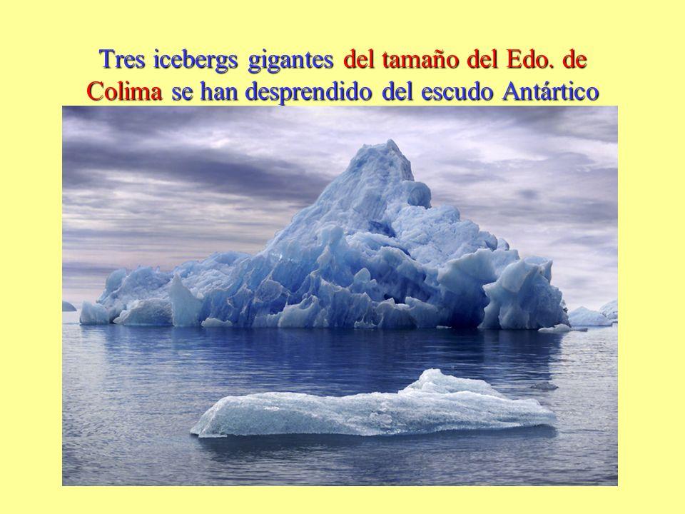 Tres icebergs gigantes del tamaño del Edo