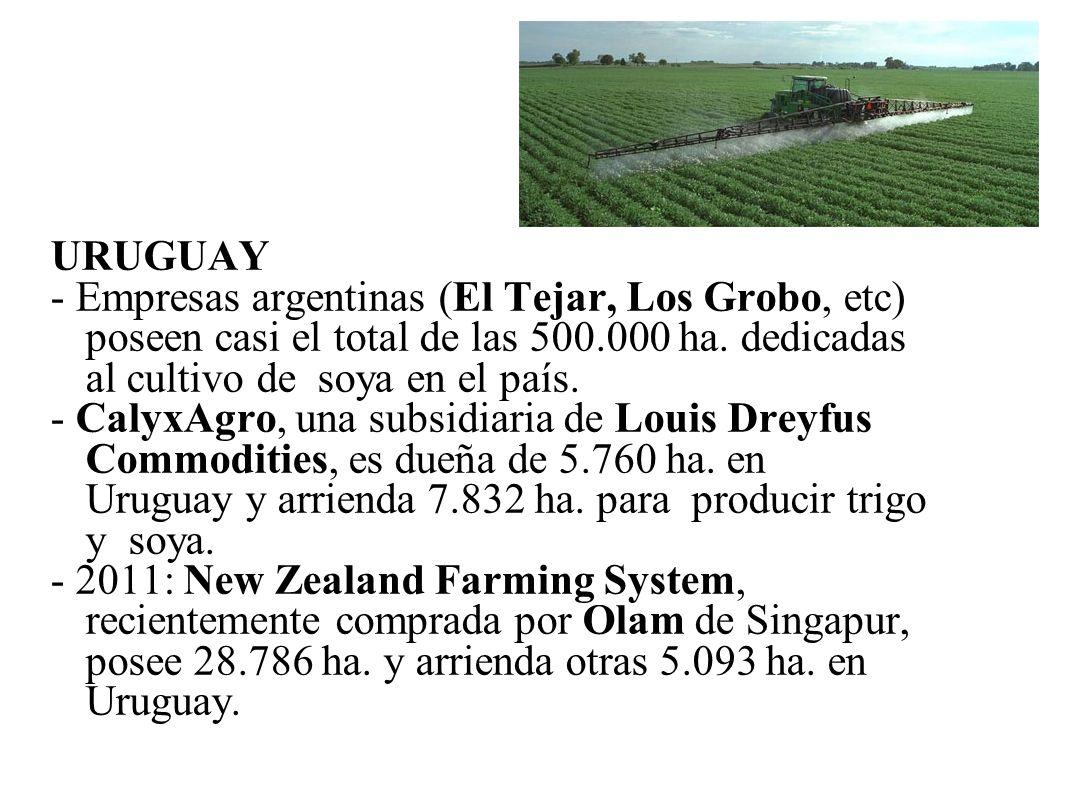 URUGUAY - Empresas argentinas (El Tejar, Los Grobo, etc) poseen casi el total de las 500.000 ha. dedicadas al cultivo de soya en el país.