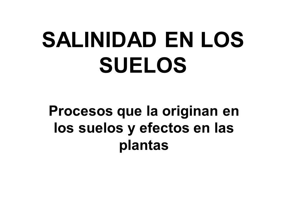 SALINIDAD EN LOS SUELOS