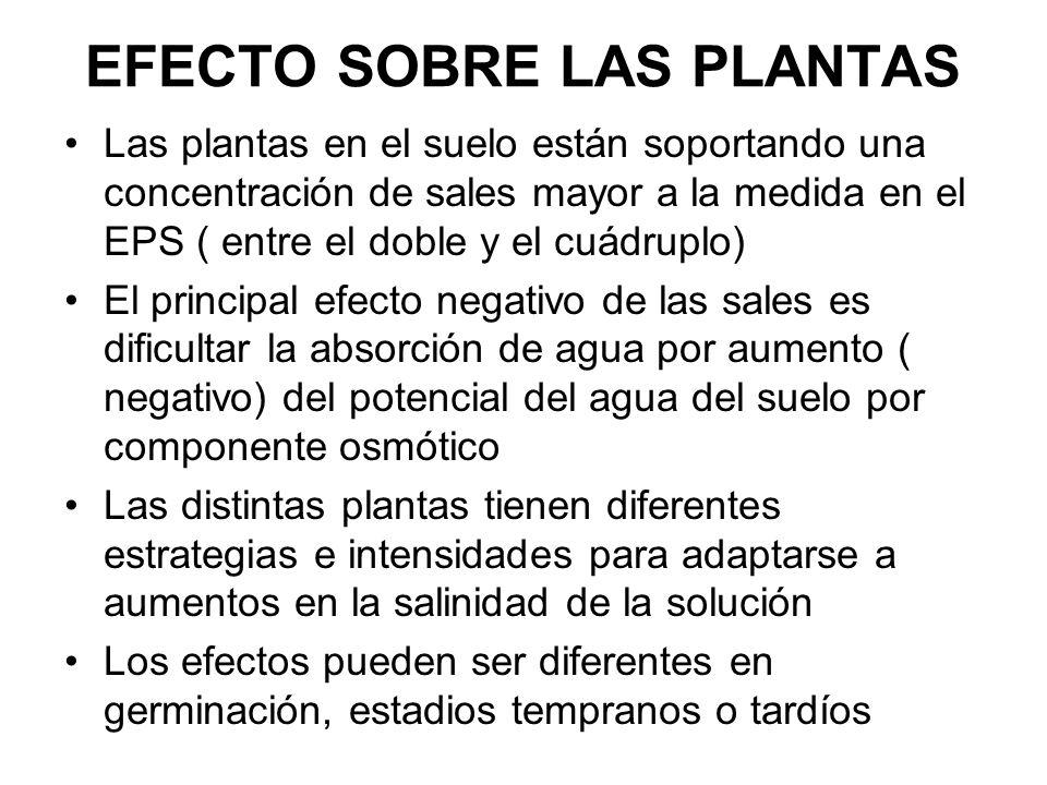 EFECTO SOBRE LAS PLANTAS