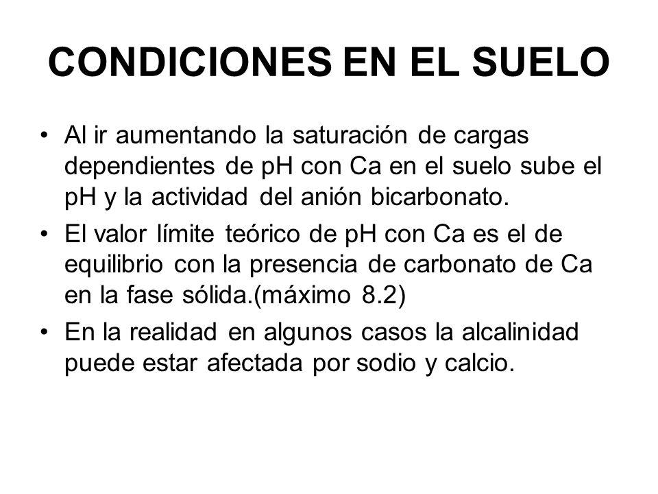 CONDICIONES EN EL SUELO