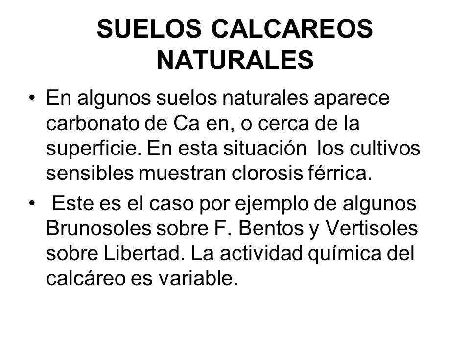 SUELOS CALCAREOS NATURALES
