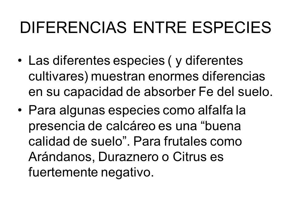 DIFERENCIAS ENTRE ESPECIES