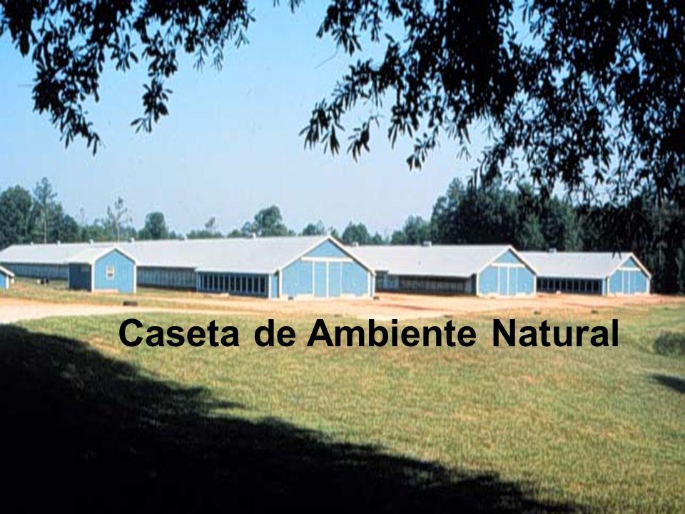 Caseta de Ambiente Natural