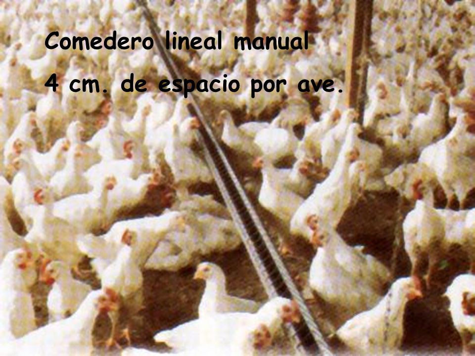 Comedero lineal manual