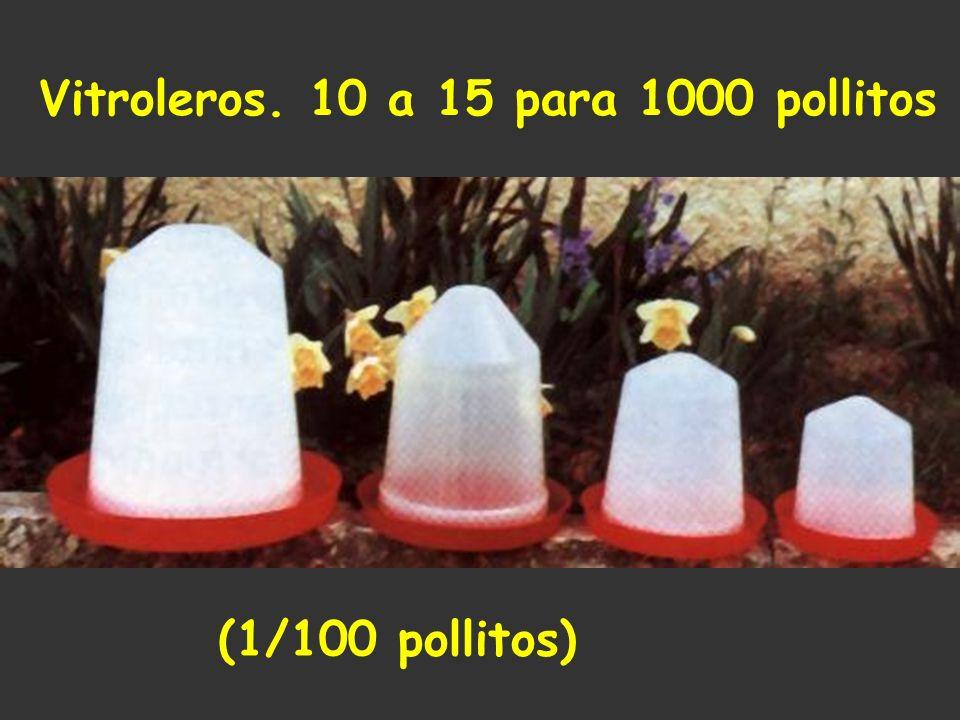 Vitroleros. 10 a 15 para 1000 pollitos