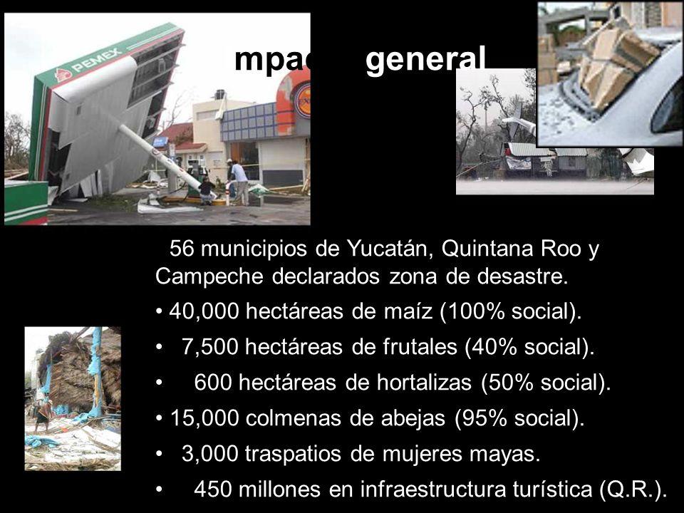 Impacto general 56 municipios de Yucatán, Quintana Roo y Campeche declarados zona de desastre. 40,000 hectáreas de maíz (100% social).