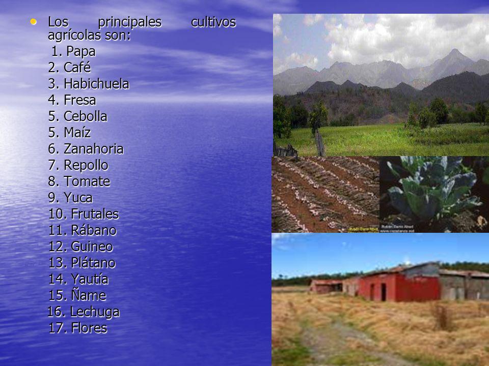 Los principales cultivos agrícolas son: