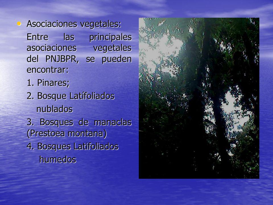Asociaciones vegetales: