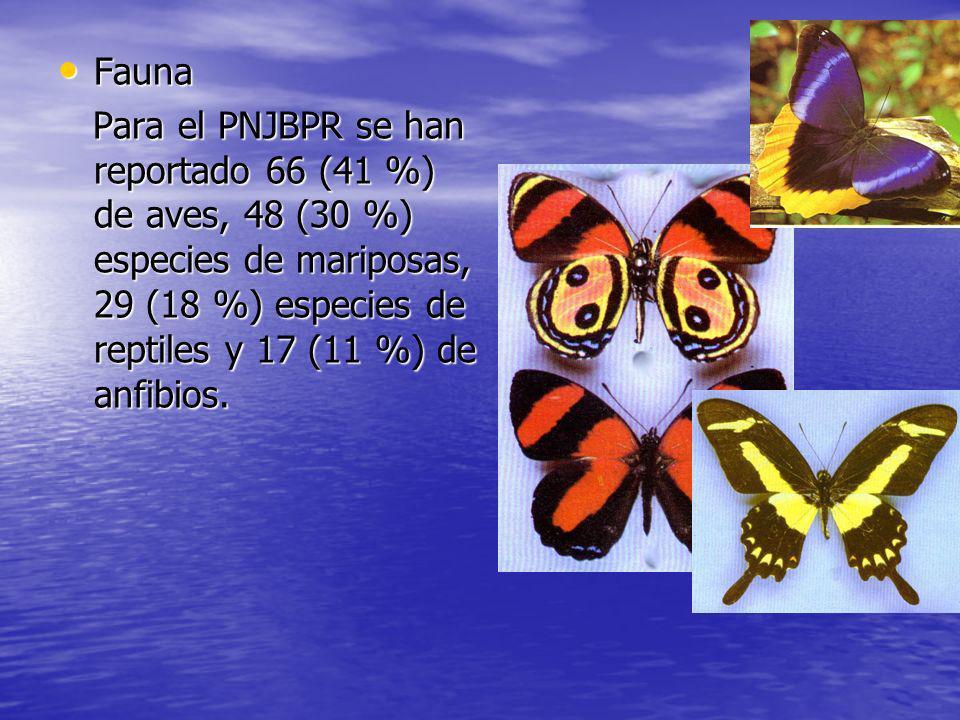 Fauna Para el PNJBPR se han reportado 66 (41 %) de aves, 48 (30 %) especies de mariposas, 29 (18 %) especies de reptiles y 17 (11 %) de anfibios.