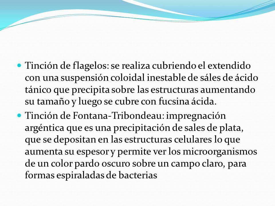 remedios para acido urico colesterol y trigliceridos cerveza light acido urico alto acido urico