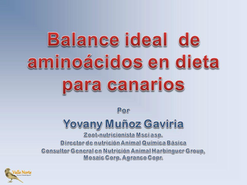 Balance ideal de aminoácidos en dieta para canarios