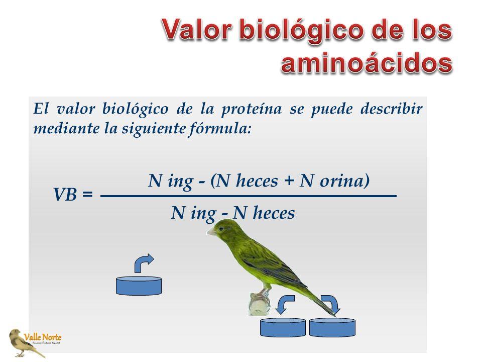 Valor biológico de los aminoácidos