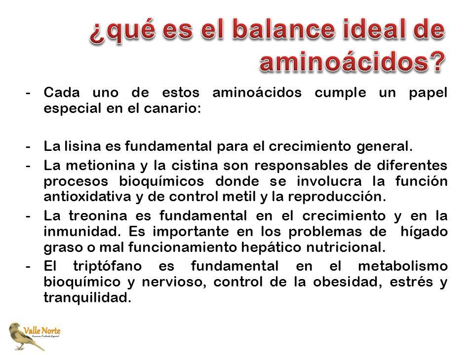 ¿qué es el balance ideal de aminoácidos