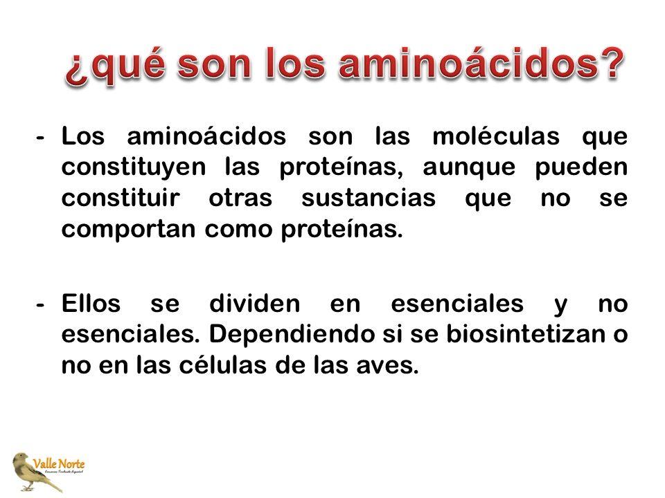 ¿qué son los aminoácidos