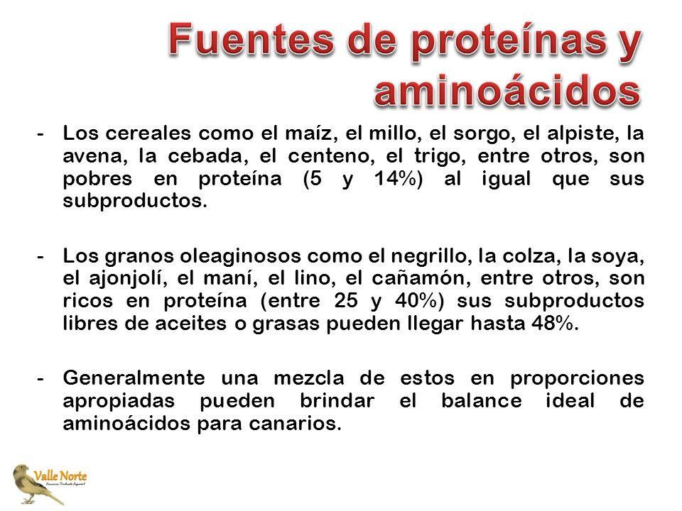 Fuentes de proteínas y aminoácidos
