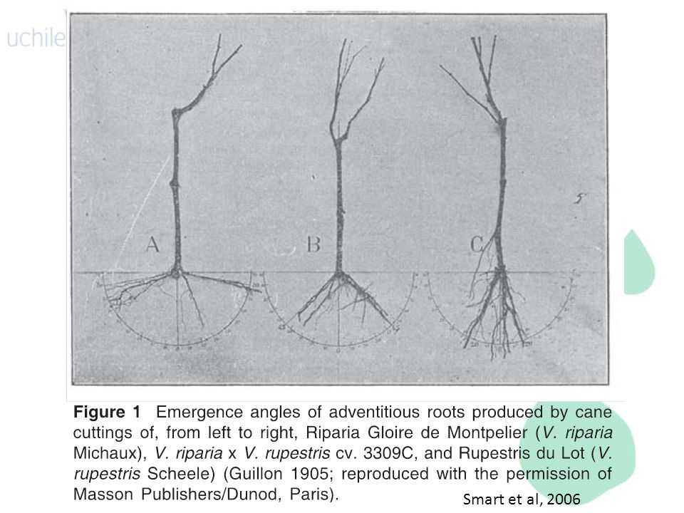 Smart et al, 2006