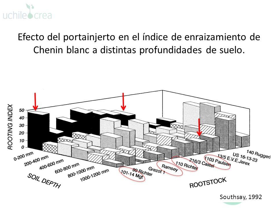 Efecto del portainjerto en el índice de enraizamiento de Chenin blanc a distintas profundidades de suelo.