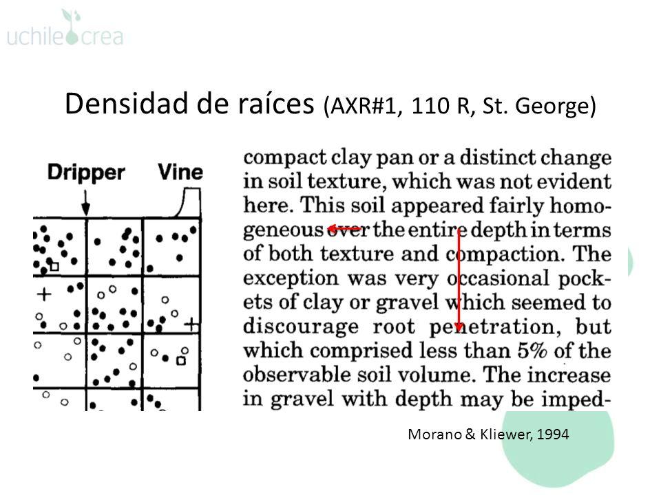 Densidad de raíces (AXR#1, 110 R, St. George)