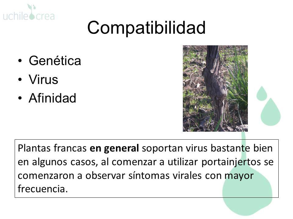 Compatibilidad Genética Virus Afinidad
