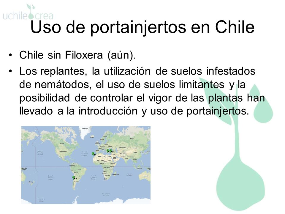Uso de portainjertos en Chile