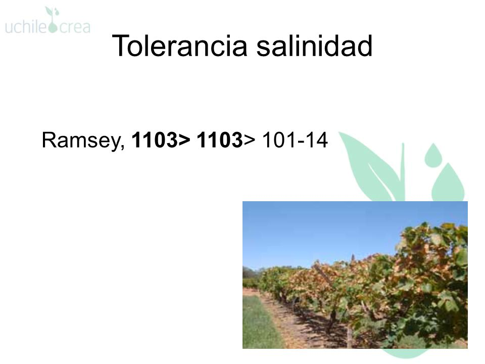 Tolerancia salinidad Ramsey, 1103> 1103> 101-14