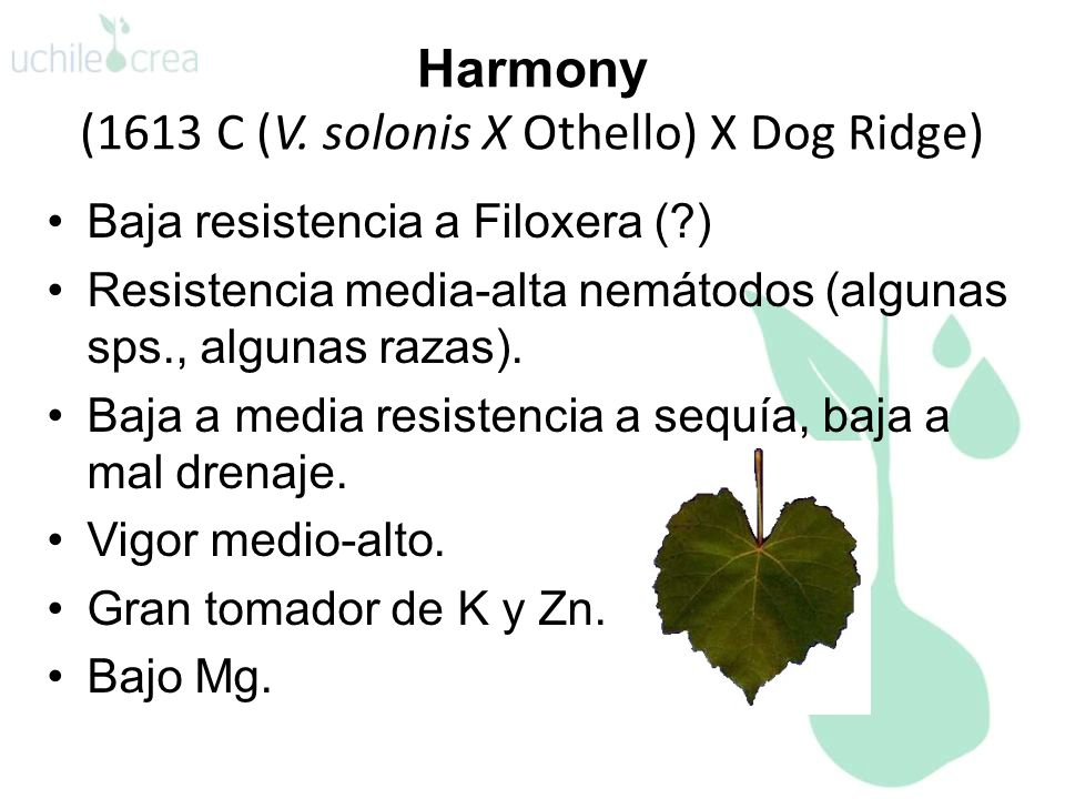 Harmony (1613 C (V. solonis X Othello) X Dog Ridge)