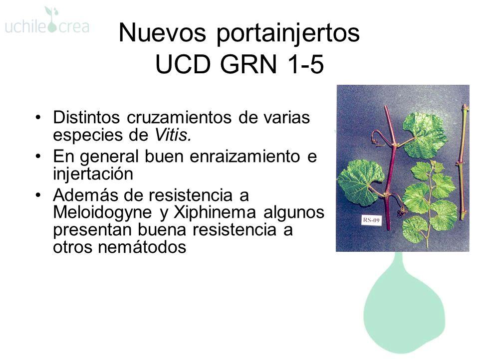 Nuevos portainjertos UCD GRN 1-5