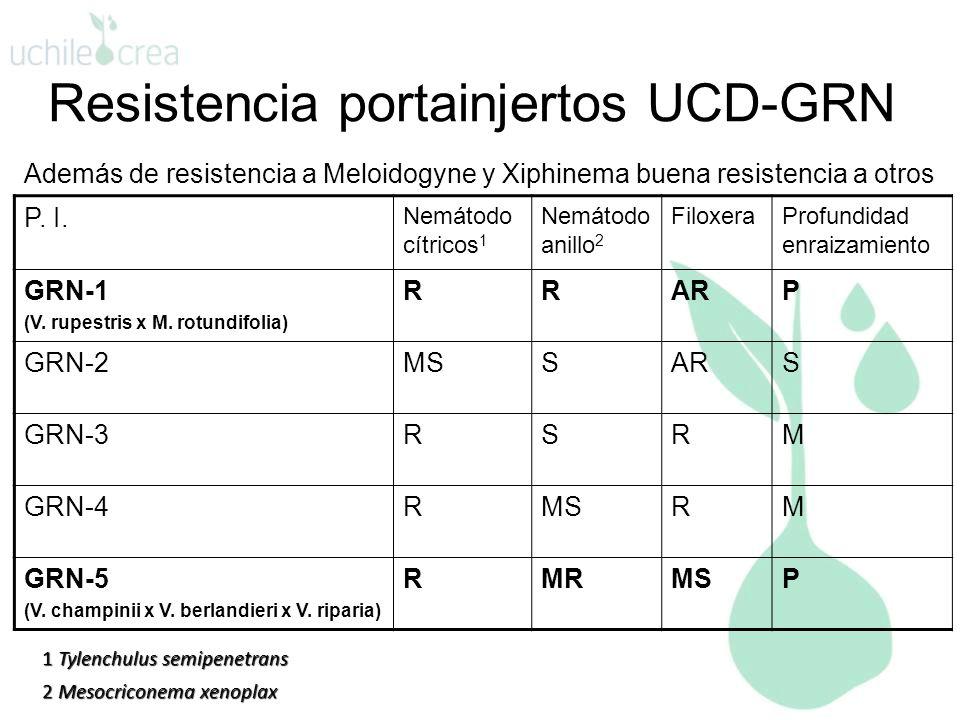 Resistencia portainjertos UCD-GRN