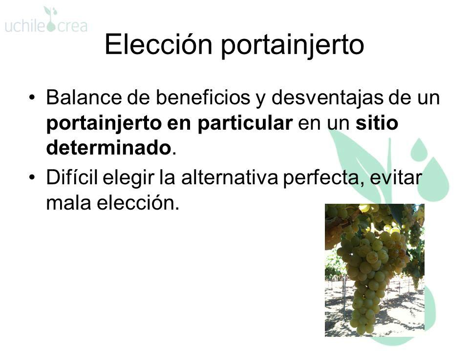 Elección portainjerto