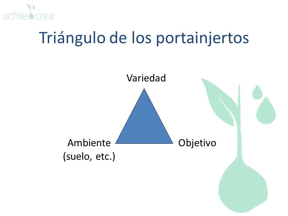 Triángulo de los portainjertos