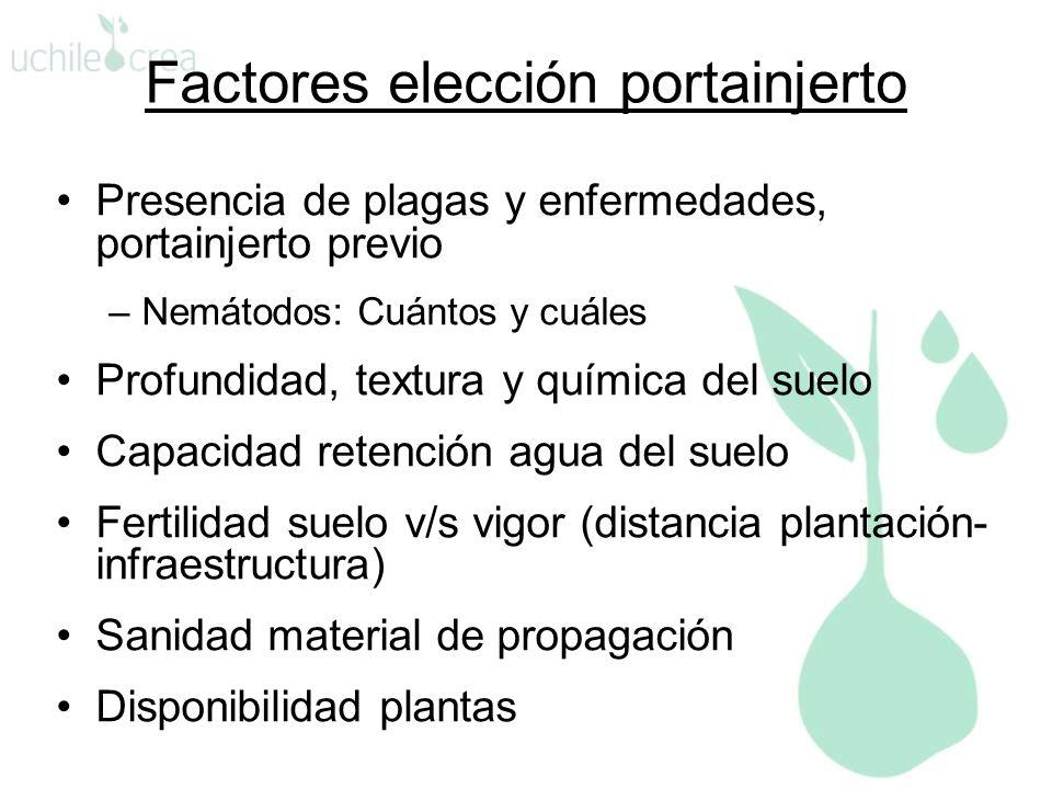Factores elección portainjerto