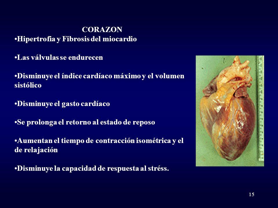 CORAZON Hipertrofia y Fibrosis del miocardio. Las válvulas se endurecen. Disminuye el índice cardíaco máximo y el volumen sistólico.