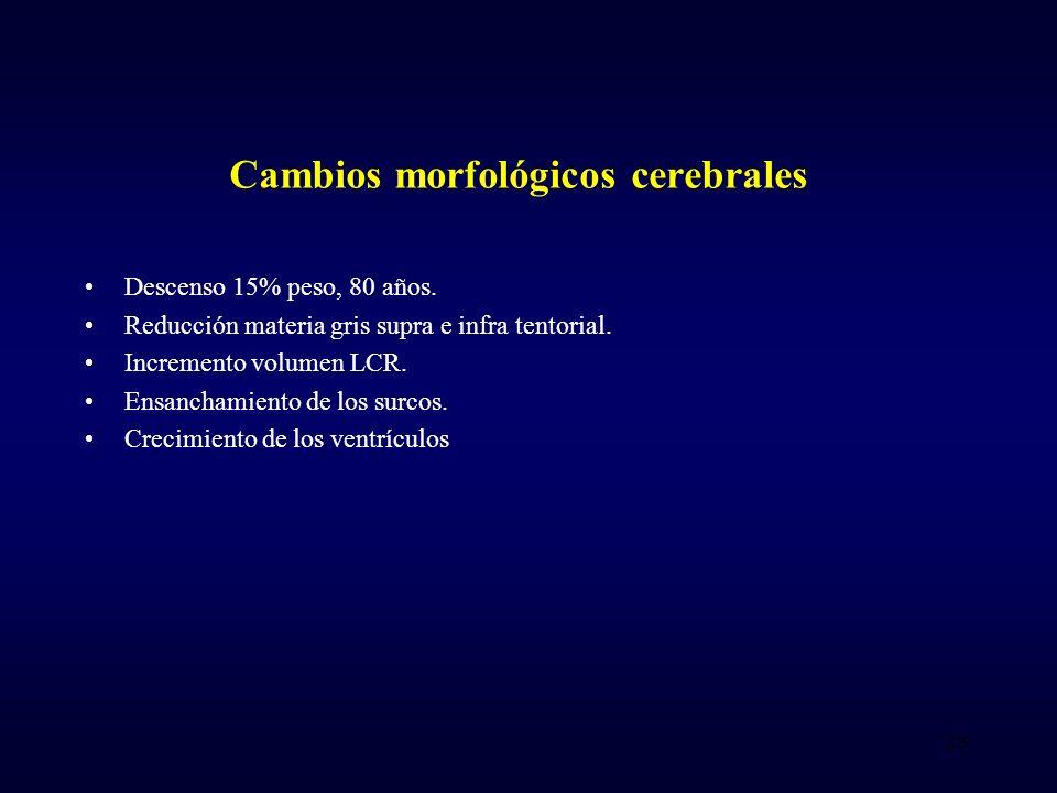 Cambios morfológicos cerebrales