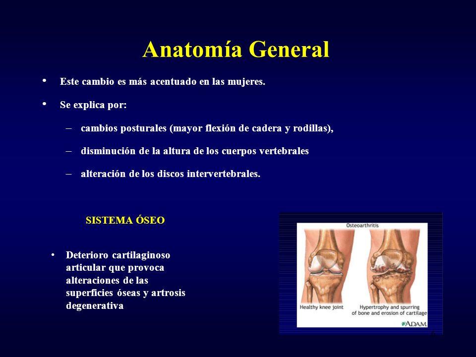 Anatomía General Este cambio es más acentuado en las mujeres.